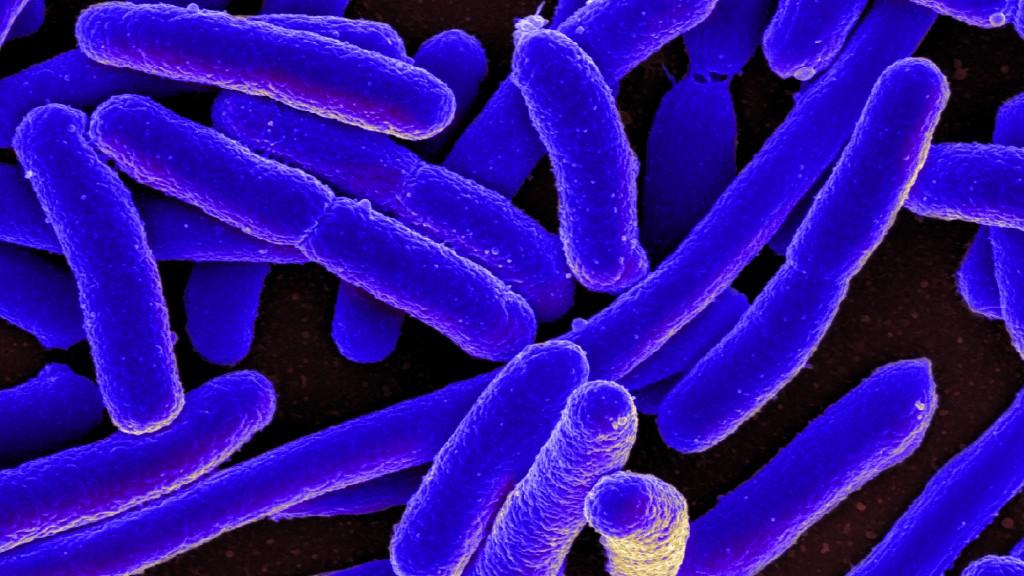 Predatory Bacteria Can Devastate Superbug Populations